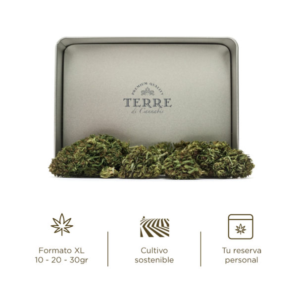briosa cbd topskud Jack Frost cannabis 4
