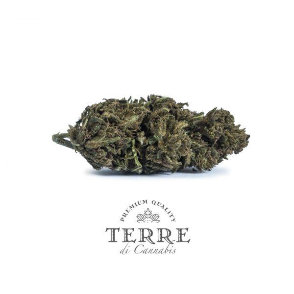 diva topskud cannabis cbd amnesia 3