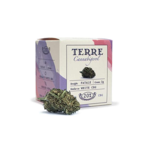 fatal cbg topskud white cannabis 2