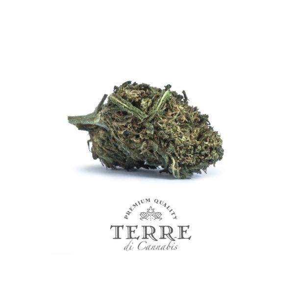 fatal cbg topskud white cannabis 3