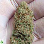 CBD Indica Blueberry Topskud  AAA+ kvalitet – 1g