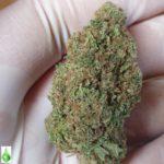 CBD Indica Blueberry Topskud  AAA+ kvalitet – 10g
