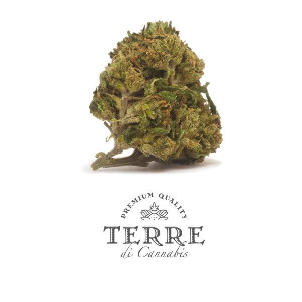 perla topskud cbd cannabis ak 47