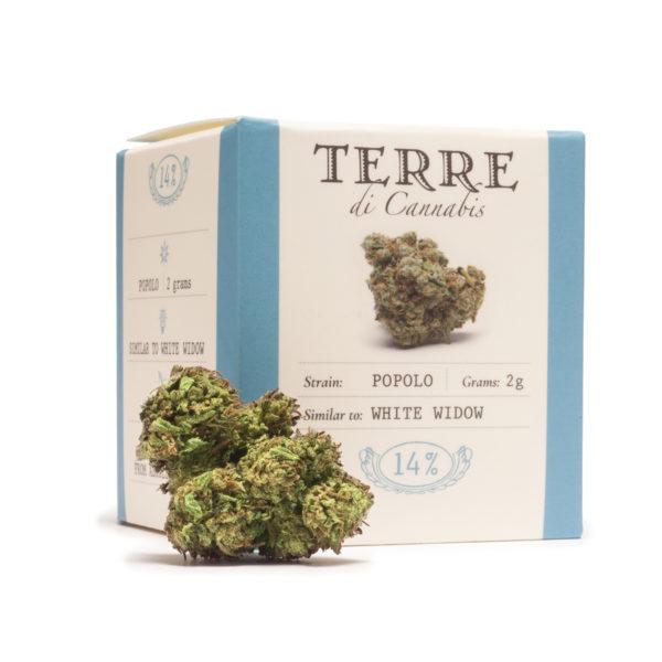 popolo topskud cannabis cbd white widow 3