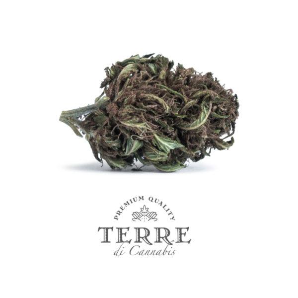 stella cbd topskud cannabis purple haze 3