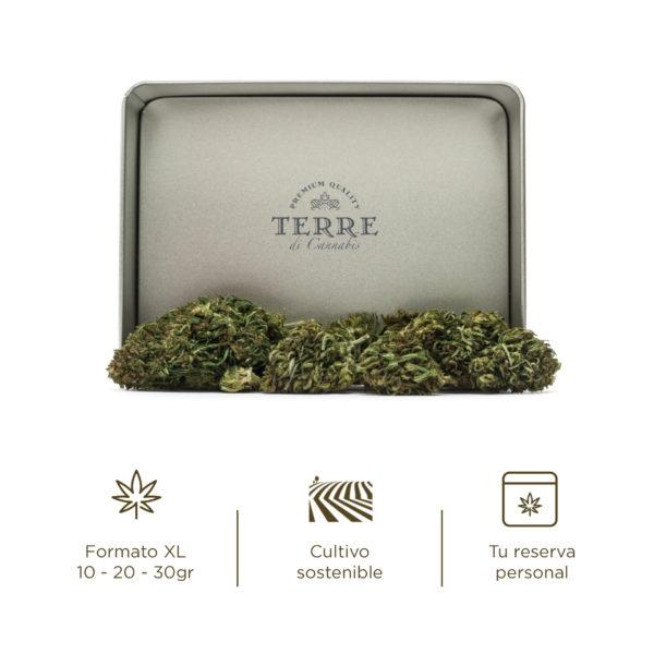 stella cbd topskud cannabis purple haze 4