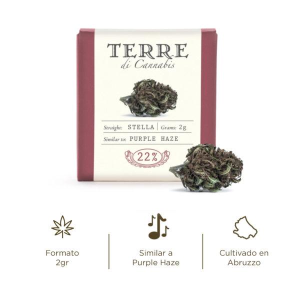 stella cbd topskud purple haze cannabis
