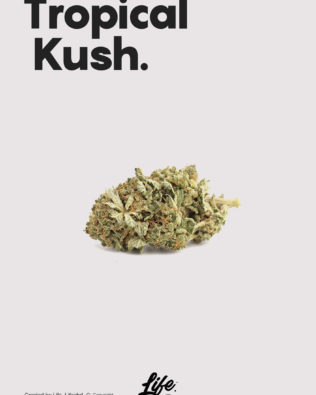Life CBD Tropical Kush topskud – 14% CBD